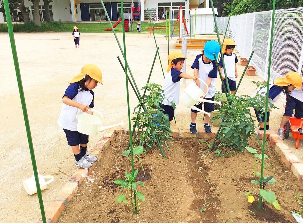 季節の野菜を育てよう